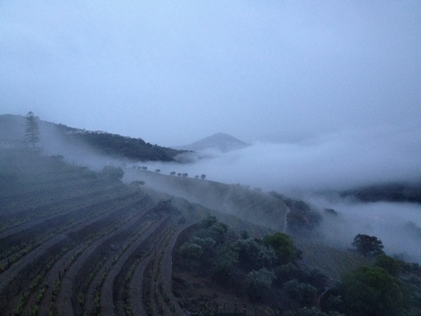 Early morning low clouds view at Quinta do Noval
