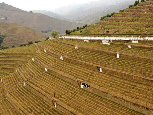 Terraced-vineyards-at-Quinta-do-Noval.JPG